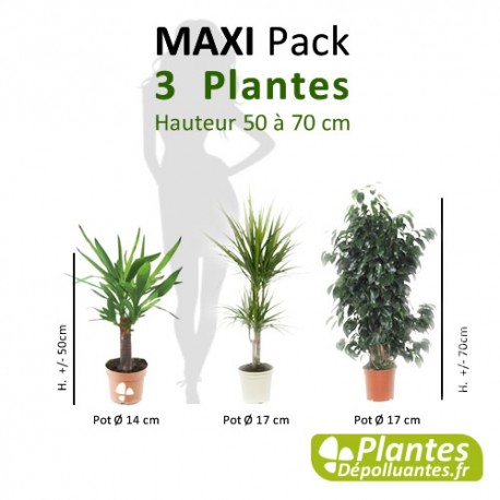 plante d 39 int rieur d polluante pack maxi 3 plantes. Black Bedroom Furniture Sets. Home Design Ideas