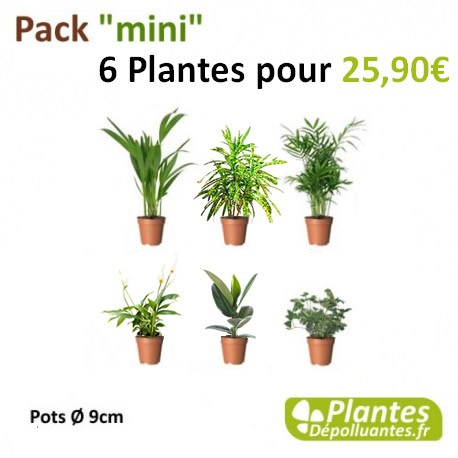 plante d 39 int rieur d polluante pack mini 6 plantes. Black Bedroom Furniture Sets. Home Design Ideas