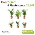 Plantes Dépolluantes - Pack [Mini] 6 Plantes