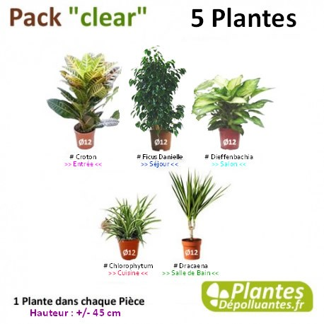 plante d 39 int rieur d polluante pack clear 5 plantes. Black Bedroom Furniture Sets. Home Design Ideas