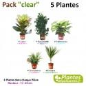 Plantes Dépolluantes - Pack [Clear] 5 Plantes