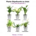 Plante au choix + Cache-pot Galvanisé