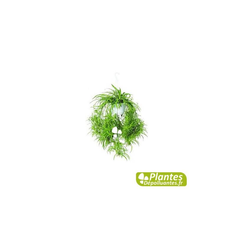 Plante d interieur depolluante photos de conception de for Achat plante interieur