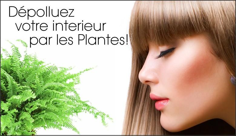Dépolluez votre intérieur par les Plantes !