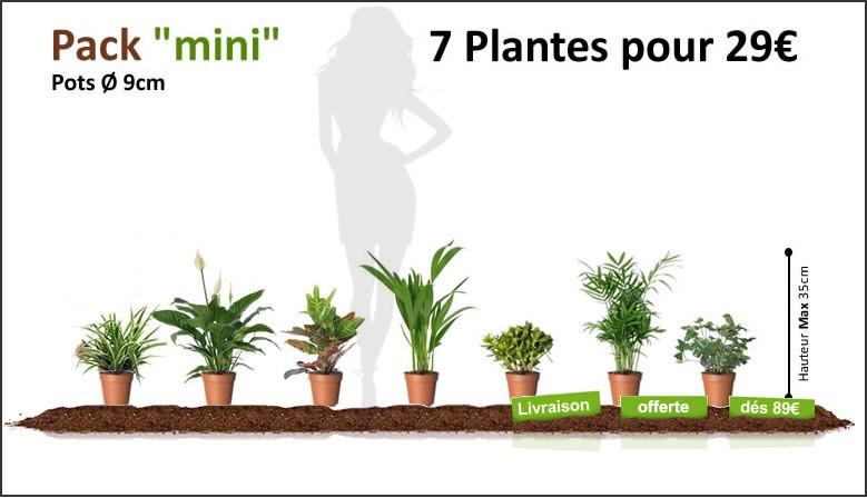 Pack Mini 7 Plantes Dépolluantes pour 29€