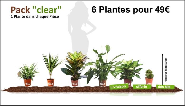 Pack Clear - 6 Plantes Dépolluantes pour 49€