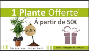 Plantes Dépolluantes - 1 Plante offerte