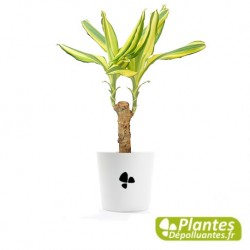Plantes Depolluantes Plante Depolluante Plantes D